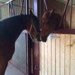 Riabilitazione Equestre - Centro Ippico Maneggio Michyhorse